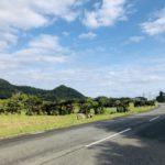 奄美空港付近のバスやレンタカーのおすすめは?特典やフリーパスまとめ