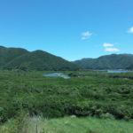 奄美大島きたなら外せないスポット!マングローブ原生林のおすすめ