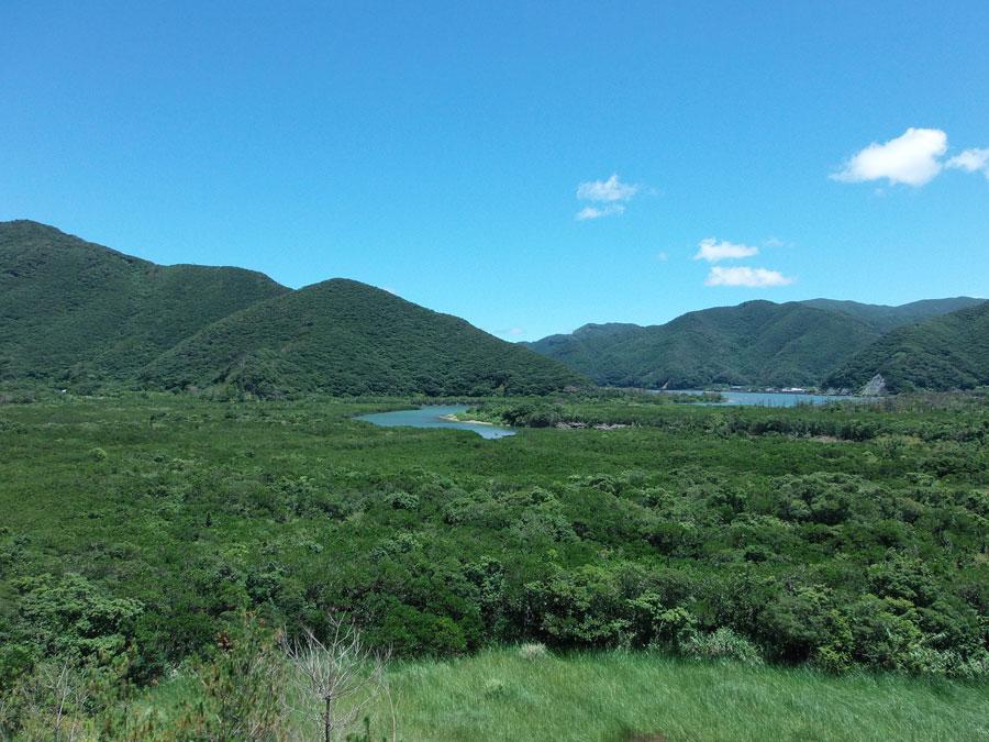 「奄美大島きたなら外せないスポット!マングローブ原生林のおすすめ」のアイキャッチ画像