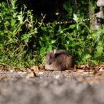 クロウサギは奄美大島のどこで見れる?黒うさぎのナイトツアーの場所や料金(値段)を調査!
